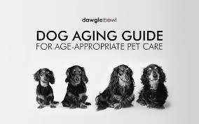 Dog Age Chart By Breed Dog Age Chart By Breed Archives Dawgiebowl