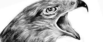 Come Disegnare Un Falco Rosy Di Noia
