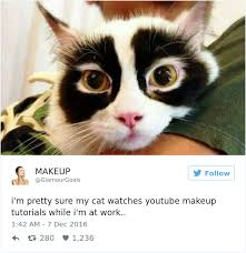 when your pet watches you makeup tutorial funny meme cute pet humor lol