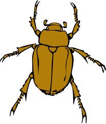 bug clipart png. beetle bug clip art at clker.com - vector online, royalty free \u0026 public domain clipart png ?