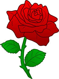 Image result for labour party rose