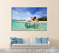 swimming pigs of the bahamas in the out islands of the exuma 2352 ready to on pig canvas wall art with swimming pigs of the bahamas in the out islands of the exuma 2352