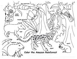 Amazon Animal Coloring Page Rainforest Animals Pages Free Online