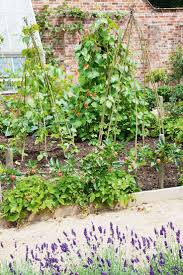 Ornamental Kitchen Garden 17 Best Images About The Vegetable Garden On Pinterest Raised