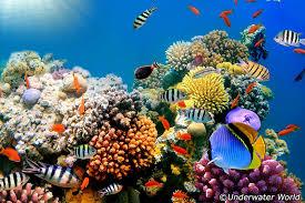 real underwater world. Brilliant World Underwater World Throughout Real