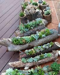 beautiful indoor succulent garden