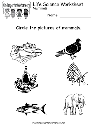 1000+ images about Animal Themed Worksheets on Pinterest ...Kindergarten Life Science Worksheet Printable