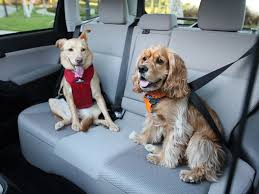 top performing dog seat belts crates and carriers