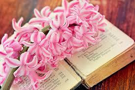 hyacinth flower book old book fragrant flower