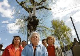 Silver birch trees are hacked back | Echo