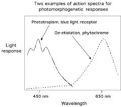 Action Spectrum Lecture 36