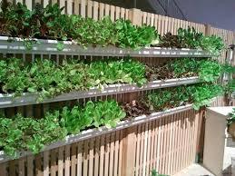 fence garden ideas. rain gutter gardening on fence garden ideas