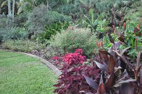 beautify your yard with south florida native plants