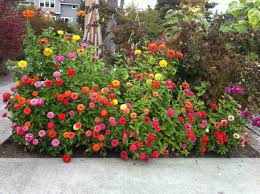 Small Picture This charming Colourfull Flower Garden Design Ideas pic above
