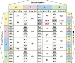 14 Clean Amino Acids Chart Abbreviations