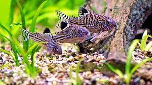 Image result for clean aquariums