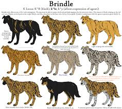 Brindle Color Chart Guide To Brindle Dog Coat Pattern And Colors Dog Coat