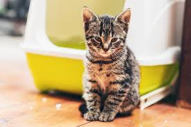 Cat Litter Comparison Chart Self Cleaning Kitty Litter Boxes A Side By Side Comparison