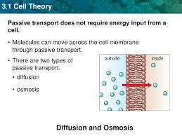 3 Types Of Passive Transport Unit 3 Cell Membranes Diffusion And Osmosis