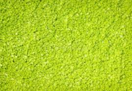 Green carpet texture stock photo Image of material pile 38785718