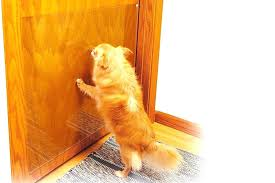 dog scratching door frame how to keep cat from scratching door awesome cover the door in