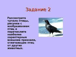 Презентация о классе птиц Задание 2Рассмотрите чучело птицы рисунки с изображением птиц и перечислите наиболее характерные внешние признаки отличающие птиц от других животных