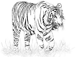 Small Picture Tiger kids coloring pages free printable coloring pictures kids