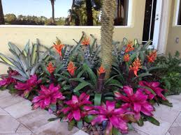 Tropical Flower Garden Landscape Designs Bromeliad Garden Lots Of Color Gorgeous Garden