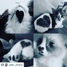 Blog Seite 3 Von 6 Katzen Hilfe Und Tipps