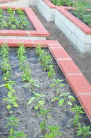 Kitchen Garden India Entertaining From An Ethnic Indian Kitchen Raised Beds