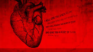 Human Heart Medical Heart Wallpaper