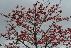 beautiful flowering trees of india