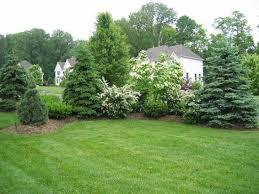 30 Spectacular Backyard Palm Tree Ideas Good Trees For Backyard