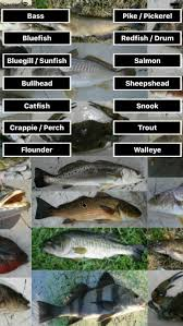 Crappie Length To Weight Chart Which App Gives Fish Weight Chart Based On Fish Length