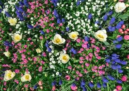 flower garden farmers almanac