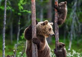 TIME for Kids | A Bear's Life