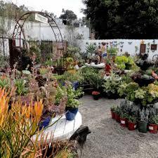 garden nurseries near me. Nursery Near Me Plants Decorate With Shrubs From The Garden Inside Nurseries N