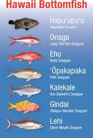 Oahu Fish Chart Noaa Pifsc Hawaii Bottomfish Heritage Project