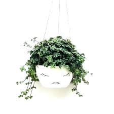 plant wall hanger indoor plant wall plant wall hangers indoor hanging indoor plants indoor plant wall plant wall hangers plant wall hanger nz