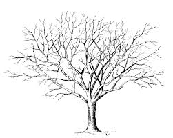 Small Picture adult tree without leaves template tree with no leaves template