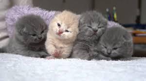 cute fluffy kittens. Simple Kittens Four Cute Fluffy Newborn Kitten And Cute Fluffy Kittens C