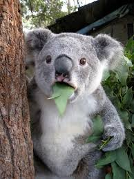 Surprised Koala Meme Generator - Imgflip via Relatably.com