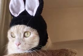 This <b>cat</b> spent all day wearing <b>bunny</b> ears and we're all giggles ...