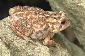 A Gallery Of North American Frogs And Toads Hgtv