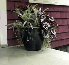 Colorful Shade Container Garden  Favorite Places U0026 Spaces Garden Container Garden Shade Plants