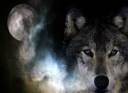 black wolf with blue eyes wallpaper.  With Wild Spirit Wolf  Moon Wild Grey Black Wolf White And Black Wolf With Blue Eyes Wallpaper W
