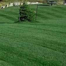 Grass Seed Germination Chart Kentucky Bluegrass Midnight