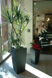 office pot plants. Fine Office Pot Plant Decoration Potted Plants On Display Office Your  Solution Table In Office Pot Plants M