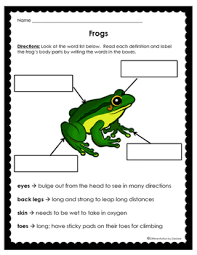 Parts Of A Frog Frog Body Part Labeling By Differentiation By Desiree Tpt