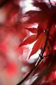 The gold and red leaves of autumn 🍂🍁 - Lara Bonazza Fotografia   Facebook